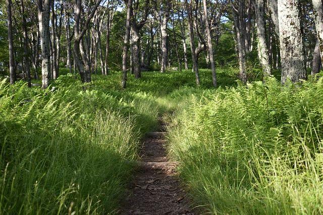 trail-3510649_640